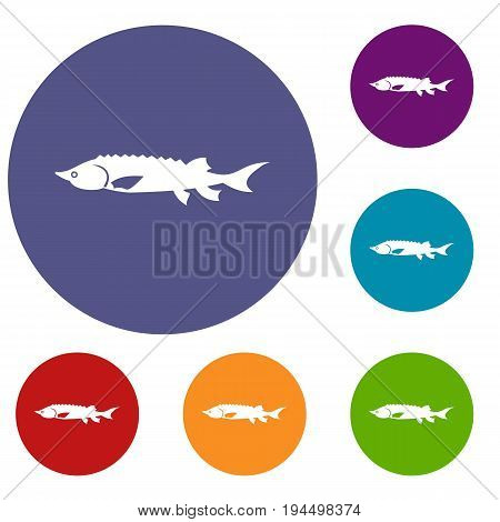 Fresh sturgeon fish icons set in flat circle reb, blue and green color for web