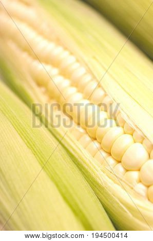 Corn on cob, close-up