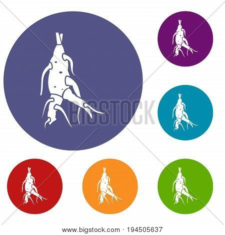 Ginseng panax root icons set in flat circle reb, blue and green color for web
