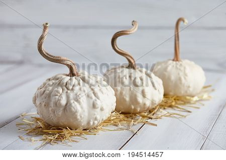 White warted halloween pumpkins on white planks, holiday decoration