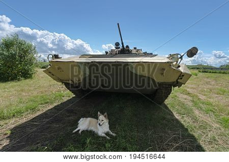 Festival of military history of Russia of XX century . Togliatti, July 8, 2017. Tank of the red army. Dog resting in the shade.