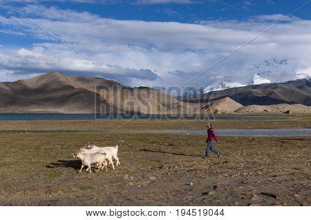 Karakul Lake China - August 15 2012: Young Uyghur sheperd girl with goats in the Karakul Lake in Northwestern China Xinjiang Province.