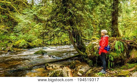 Woman looking at the fast flowing Kanaka Creek when hiking through the temperate rain forest of Kanaka Creek Regional Park near the town of Maple Ridge in British Columbia, Canada