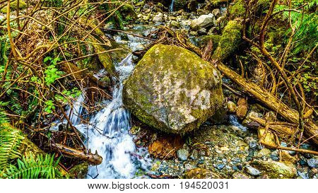 Creek in the temperate rain forest of Rolley Lake Provincial Park near the town of Mission in British Columbia, Canada