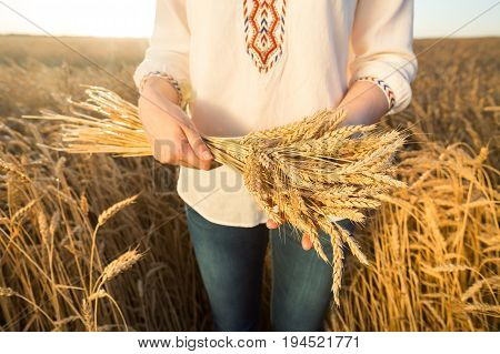 the woman in a national white shirt holding the golden ripened wheat sheaf on background of meadow wheat field. harvest, agriculture, agronomics, food, production, eco concept.