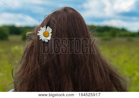 Back to us young girl standing with camomile flower in her long hair. Concept of seasons, environmental and ecology, green planet, natural beauty, Healthy natural spa, hair care