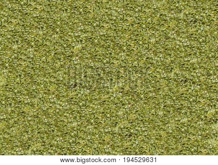 Hops for the production of beer in the form of green dried cone flowers