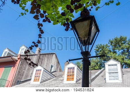 New Orleans Streetlamp with vines hanging from balcony and rooftops in background