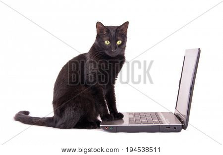 Black cat with a contemplating look on her face sitting with her front paws on top of a laptop computer, on white background