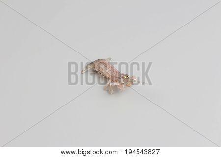 Plastic Figure Of   Peacock Mantis Shrimp