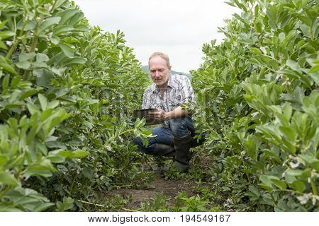 Man With Mobile Device Crouched In Middle Of Outdoor Plantation