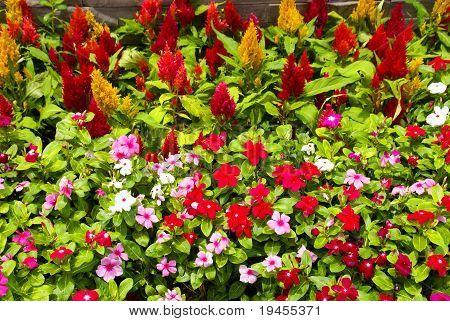 Flowers in Thailand.