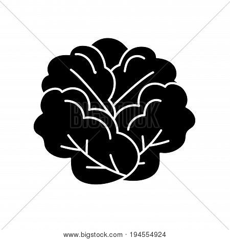 contour delicious and health lettuce vegetable vector illustration