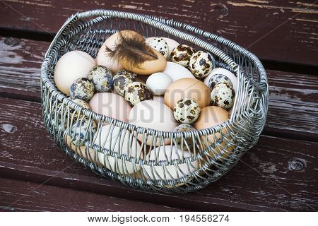 White and brown chicken fresh eggs in a metal basket