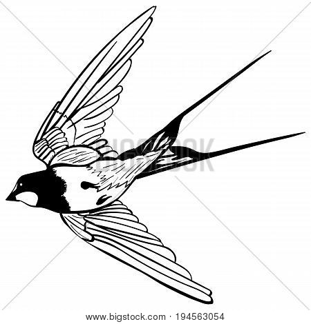 vector silhouette flying swallows on white background Sketch tattoo flying swallows black and white