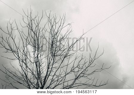 Died Tree With Cloudy Look Horror Lonely Sky Black And White Tone With Grain Effect.