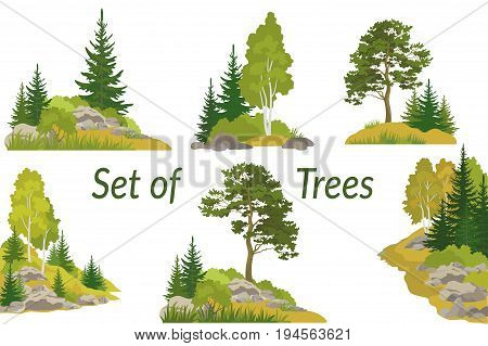 Set Summer and Autumn Landscapes, Isolated on White Background Coniferous and Deciduous Trees and Grass on the Rocks. Vector