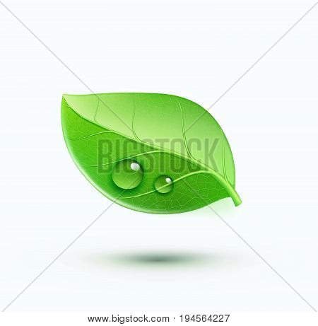 Vector illustration of green environment concept icon with glossy green leaf. May be used in ecological medical chemical food and oil design.