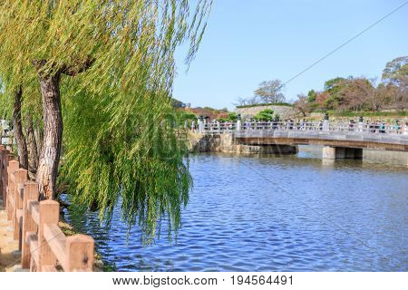 Weeping Willow tree with the river Japan street bridge front of Himeji Castle.