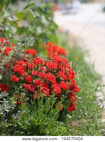 Background of wild flowers growing in Israel