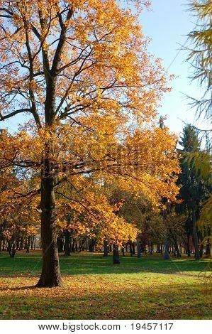 Autumn walks in the park