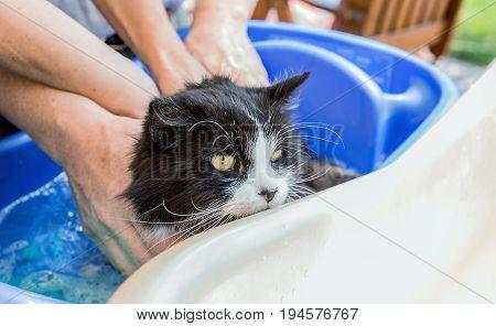 Cat bath. Wet cat. Bathing a cat in a bathtub. Cute wet cat