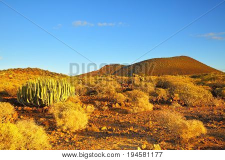 Vew of desert with cacti at sundown in Tenerife, Canary Islands.