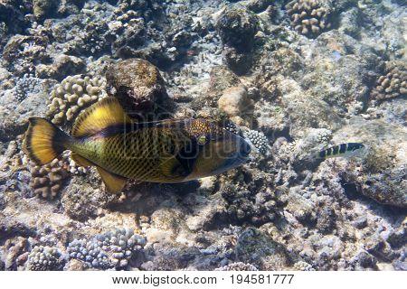 Fishes in corals . Underwater world .