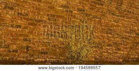 Wall  Background With A Tree Part