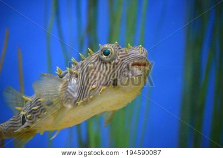 Fantastic close-up look at a fish face underwater.