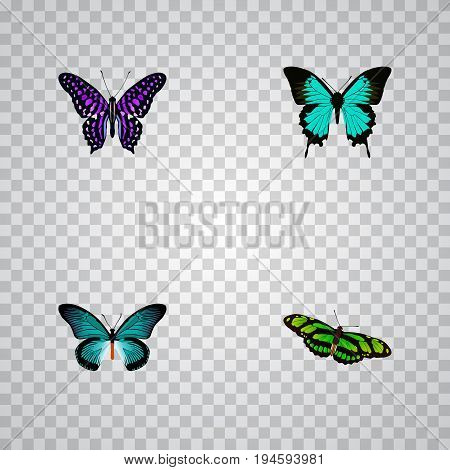 Realistic Pipevine, Green Peacock, Polyommatus Icarus And Other Vector Elements. Set Of Butterfly Realistic Symbols Also Includes Bluewing, Violet, Purple Objects.