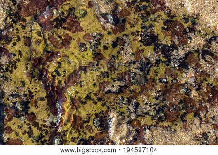 Colorful Barnacles And Lichen Pattern And Textures On Shoreline