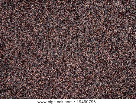 Raw dark red purple rice (Riceberry) texture pattern background (this kind of rice is originated from a cross-breed between non-glutinous purple rice and white jasmine rice in Thailand)