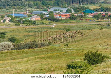 View from the hill on the rural settlement where houses and production constructions and ahead on the hill herd of sheep are in the distance visible. Krasnodar Krai Kuban.