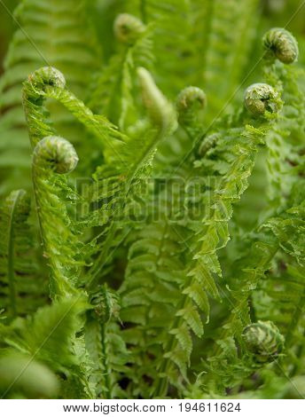 Green Fern Detail
