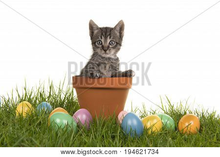 Tabby baby cat kitten in a flower pot on green grass and colored easter eggs on a white background