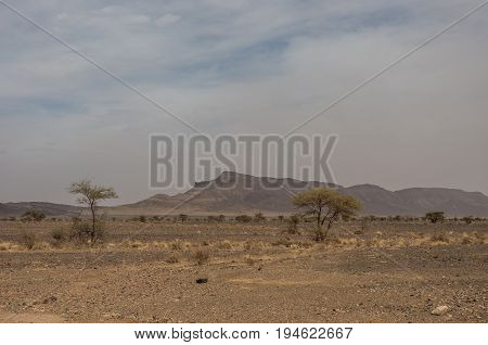 Morocco Steppe Landscape With Trees And Mount At Background. Area Between Atlas Mountains Range And