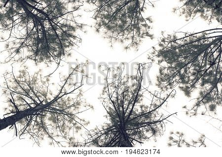 Tress against sky, view from below