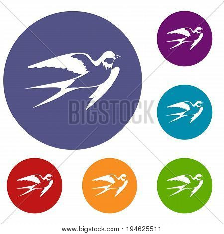 Barn swallow icons set in flat circle reb, blue and green color for web