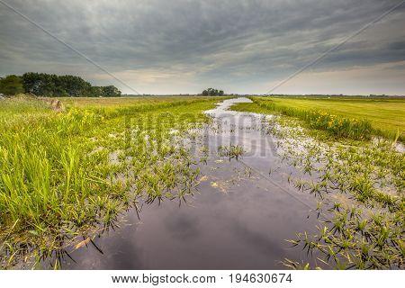 Water Soldier Vegetation