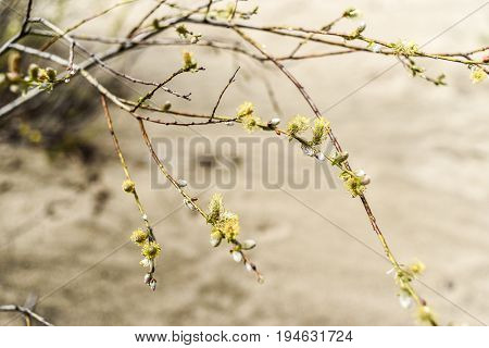 Young and fresh tree leaves blooming in spring time Poland.