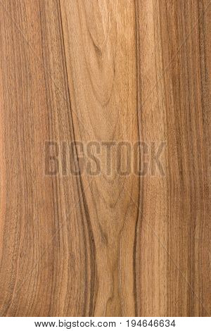 Close-up of oak plank of native shade of light brown color with beautiful pattern. Ligneous background with copy space