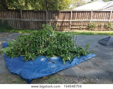a load of sticks and leaves in a blue tarp with rake
