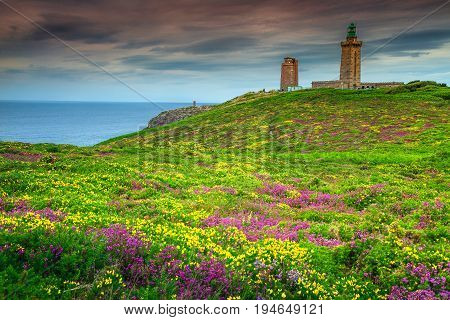 Stunning field covered with wild flowers yellow gorse violet heather and lighthouse in background Cap Frehel Brittany France Europe