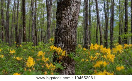Forest landscape. Oak grove with yellow flowers. Selective focus.