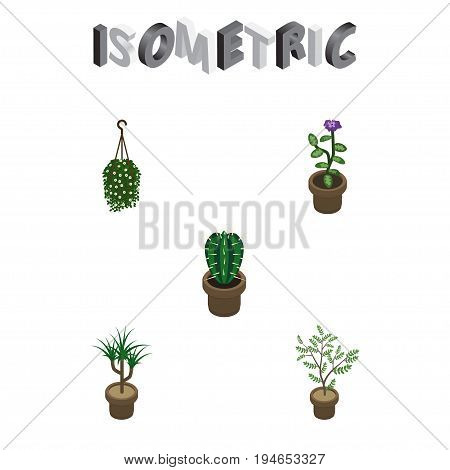 Isometric Flower Set Of Fern, Peyote, Blossom And Other Vector Objects. Also Includes Botany, Pot, Flower Elements.