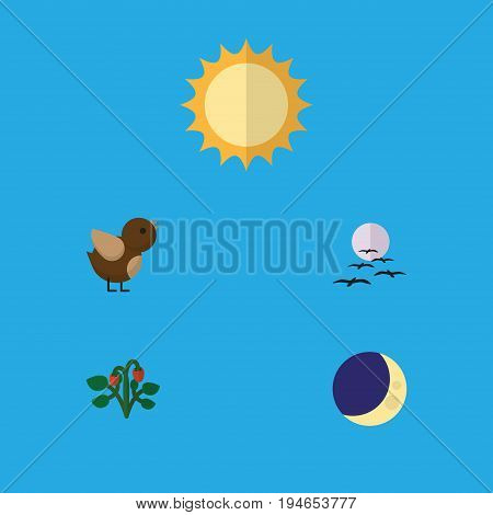 Flat Icon Bio Set Of Half Moon, Gull, Bird And Other Vector Objects. Also Includes Midnight, Sparrow, Strawberry Elements.