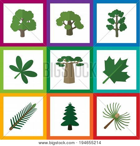 Flat Icon Nature Set Of Spruce Leaves, Rosemary, Maple And Other Vector Objects. Also Includes Baobab, Rosemary, Leaves Elements.