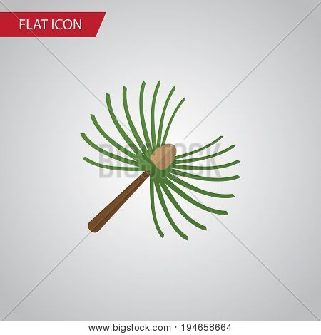 Isolated Spruce Leaves Flat Icon. Rosemary Vector Element Can Be Used For Rosemary, Spruce, Leaves Design Concept.