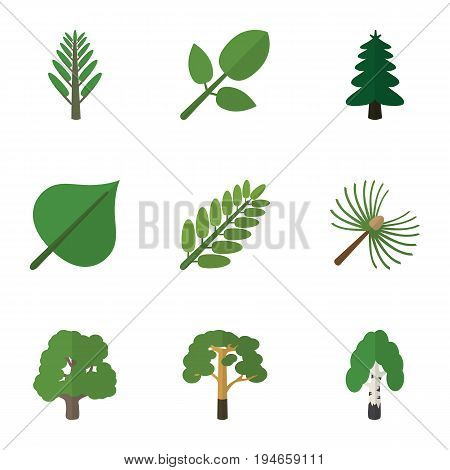 Flat Icon Nature Set Of Timber, Hickory, Wood And Other Vector Objects. Also Includes Wood, Leaf, Park Elements.
